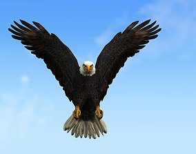 eagle3d animated 3D Animated Eagle Character