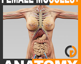 3D model Human Female Anatomy Muscles Skeleton Internal