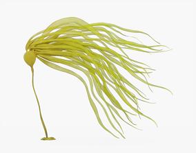3D model Bull Kelp