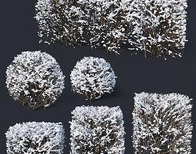 Cotoneaster lucidus Nr7 winter hedge set 3D model