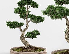 3D pot-plant Bonsai tree 01