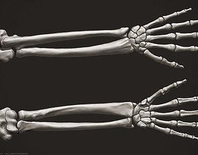 3D Human Arm Bones