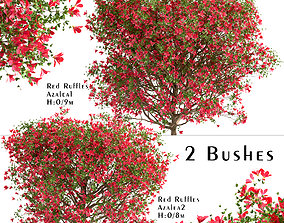 3D Set of Red Ruffle Azalea or Rhododendron Bushes - 2