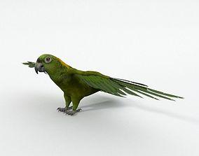 3D model Green Parrot lowpoly