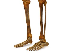 3D asset Human Legs Scanned