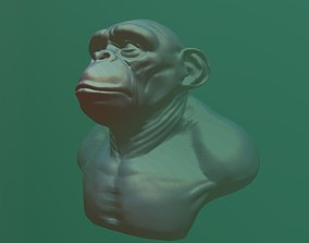 3D model chimpanzee head and bust