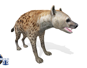 animated Hyena Rigged Animated Lowpoly 3D Model