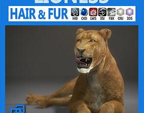 lioness 3D model Lioness