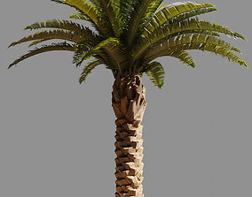 Palm tree 3d photoscan game-ready trunk