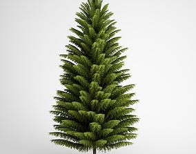 Norway Spruce 21 3D model