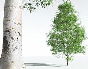 3D EVERYPlant Silver Birch 10 --20 Models--