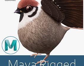 3D asset rigged Sparrow bird