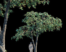 3D model Terminalia Catappa Var2
