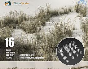3D asset Beach grass pack B