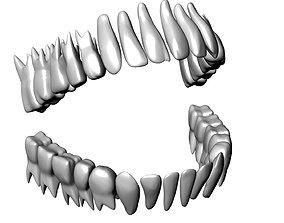 Anatomical model of all teeth