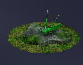 Orange Hook locust cricket GRASS INSECTS 3D