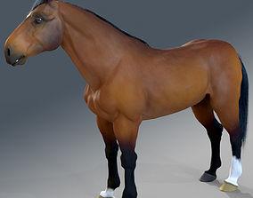 Horse - Bay Warmblood 3D model