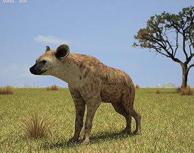 3D model Spotted Hyena Crocuta Crocuta