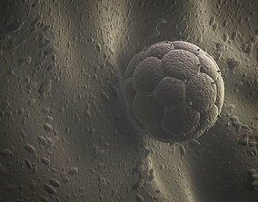 3D Embryo And Womb
