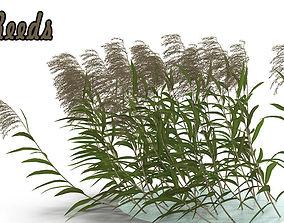 3D model Reeds