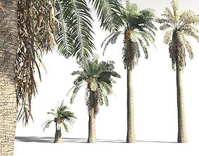 3D EVERYPlant Date Palm 03 -- 10 Models
