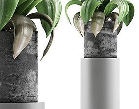 Plants Collection 89 3D