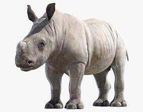 Rhino Baby 3D asset