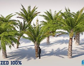 Palm Trees Set Optimized 3D model