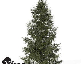 XfrogPlants Colorado Spruce 3D