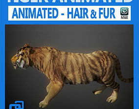3D Animated Tiger