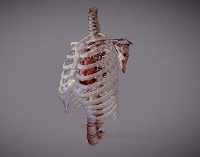 3D model Animated heart inside RibCage