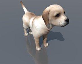 Labrador dog kitty 3D model