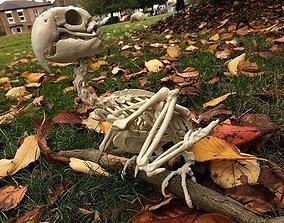 3D printable model Macow Skeleton