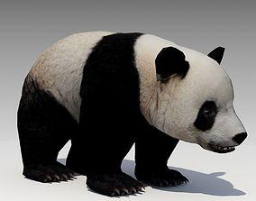 Giant Panda Animated 3D model