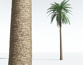 EVERYPlant Date Palm 09 --16 Models--
