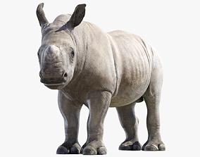 3D model Rhino Baby Rigged