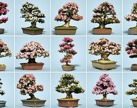 15 Satsuki Bonsai Tree Blossom Collection 3D model