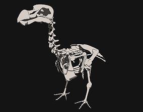 Dodo Skeleton 3D print model