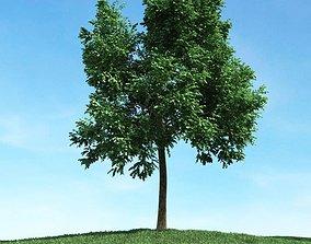 Green Leafed Tree 3D model green plantation