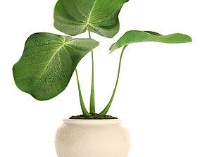 Tropical plant in pot 2 3D