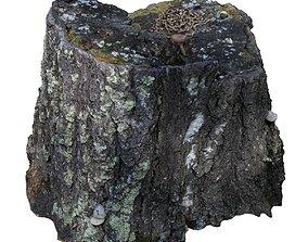 Tree stump scan 10 3D