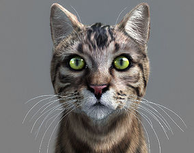 Cat 3D Models | CGTrader