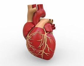 3D Human Heart valve