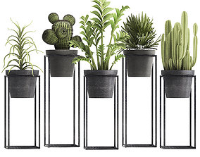 Collection of Exotic Plants 3D pot