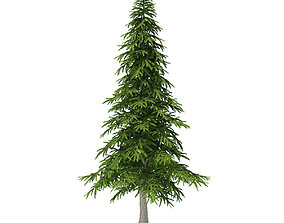 3D model Fir Tree 5point9m