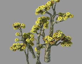 3D Plant - Poplar 04