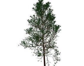 Tree wild and unkempt 3D model