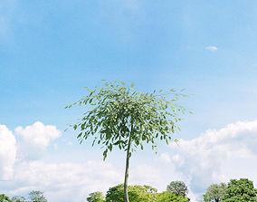 Salix repens var argentea 023 v3 AM136 3D