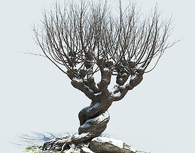 Whomping Willow 3D model