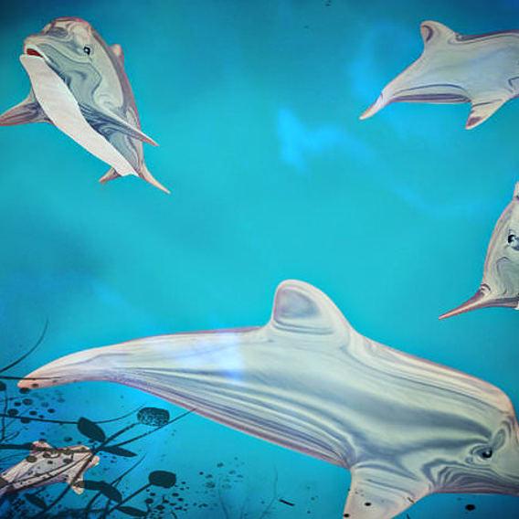 Dolphin (Doli)